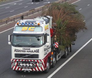 large-christmas-tree-transport